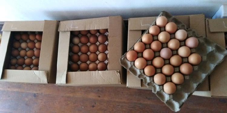 Hoender eiers {Chicken eggs} 0
