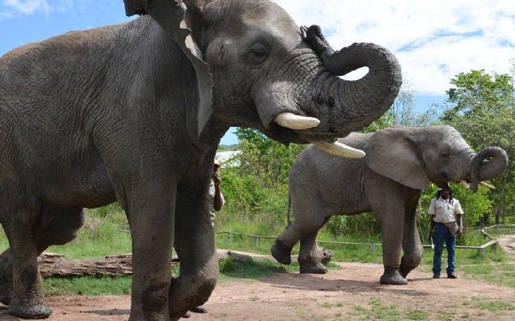 Elephant interaction (jhb/pta)
