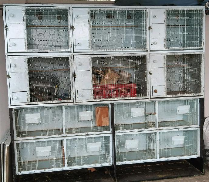 Large bird breeder for sale