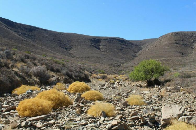 Sutherland / ceres: economical viable karoo