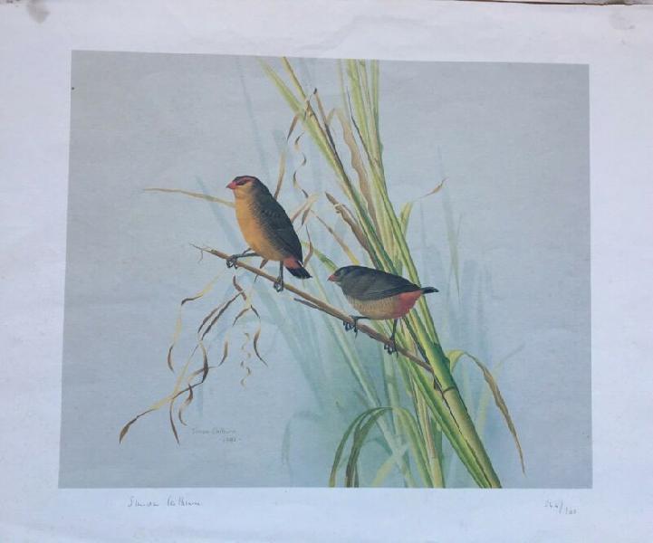 Signed & numbered simon calburn bird prints.