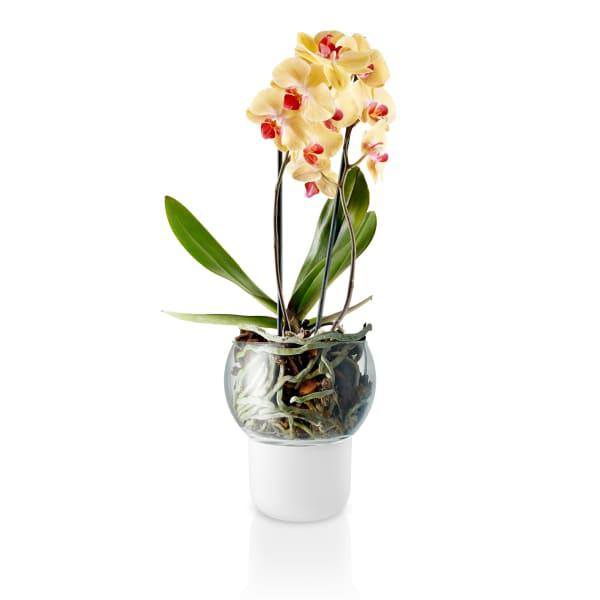 Eva solo self-watering frosted glass orchid pot