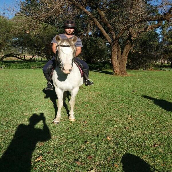 Arabian horse x nooitgedacht gelding