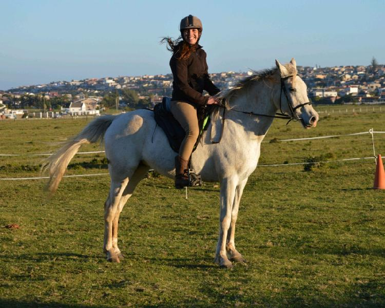 Registered arabian mare - mounted games prospect