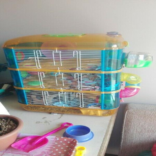 Hamsters with cage for sale