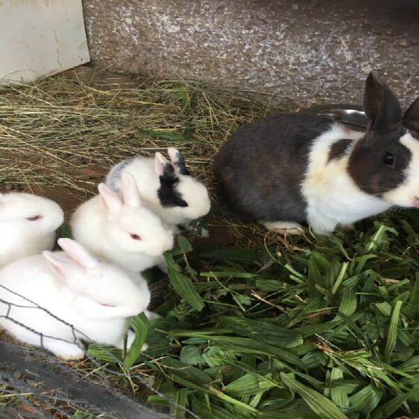 White baby bunny left