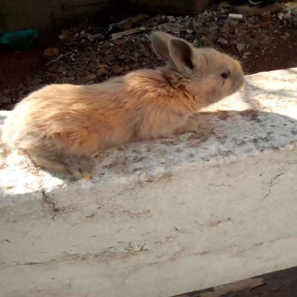 Baby rabbits r100
