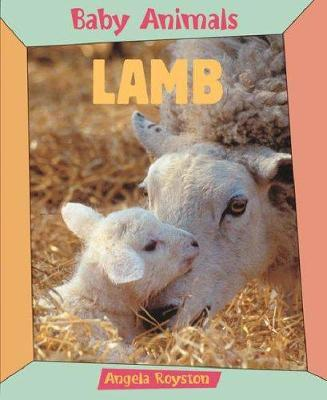 Baby animals lamb (paperback, new ed)