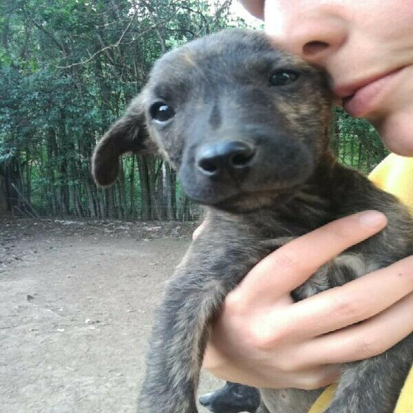 8 week old female cross puppy up for adoption -beautiful