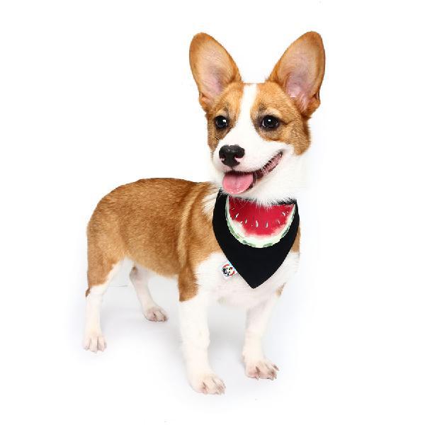 Pet dog cotton personalized collar summer winter pet bids