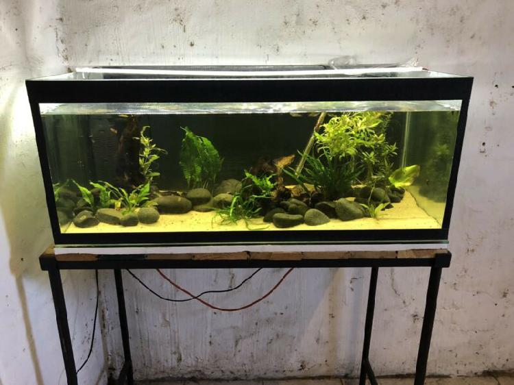 200l fish tank with stand,heater,light,filter,plants