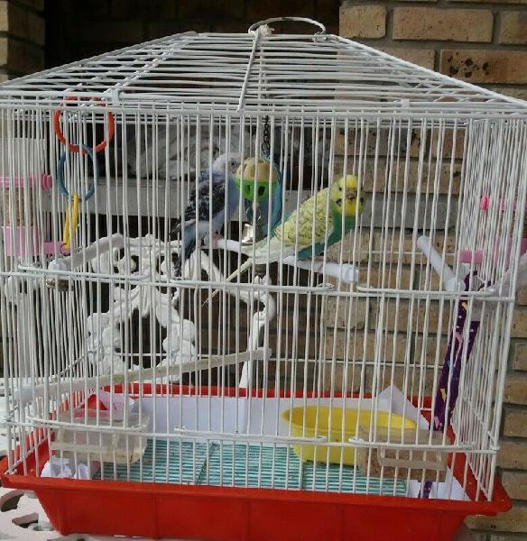 2 budgies, cage, accessories and stand