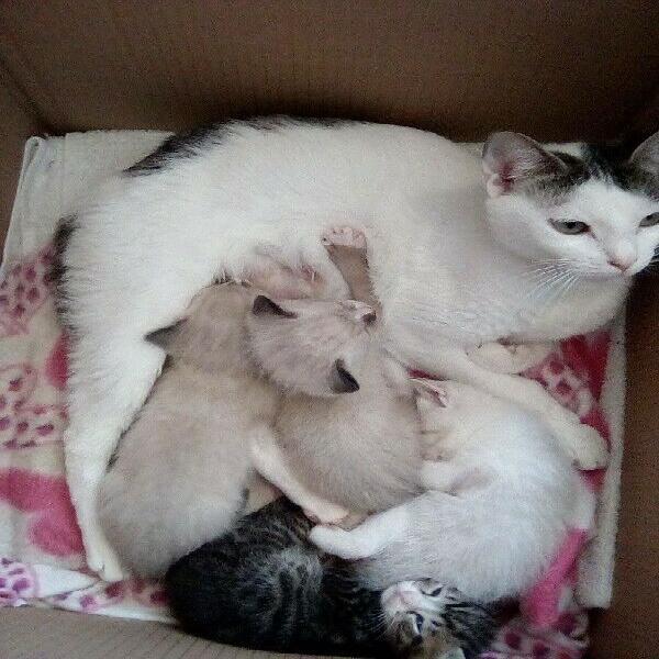 4 beautiful kittens for sale r350 each port elizabeth newton