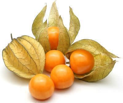 Cape gooseberry - physalis peruviana - organic heirloom