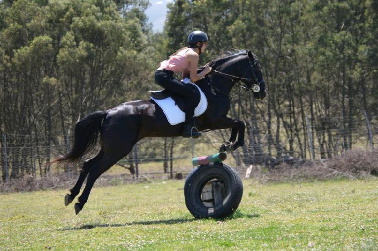 Stunning black pony mare - showjumper