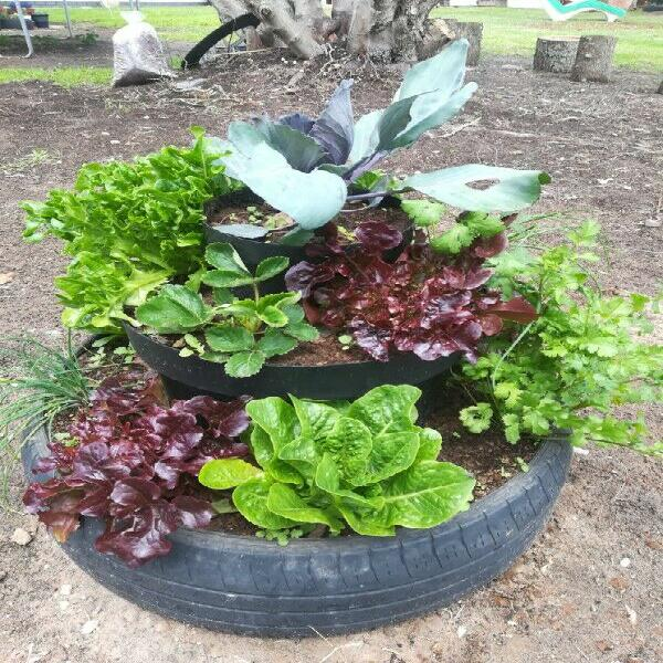 Organically grown herb gardens - christmas gift idea!