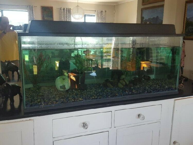 Fish tank large bargain