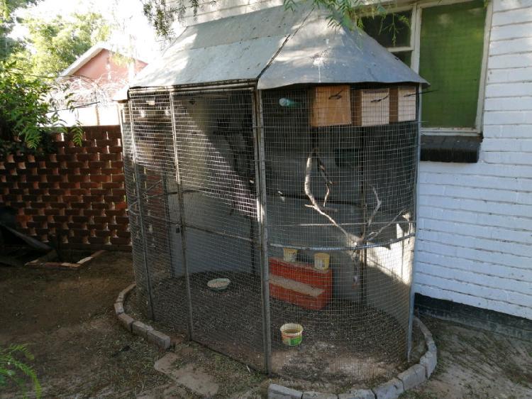 Large birdcage & 6 lovebirds