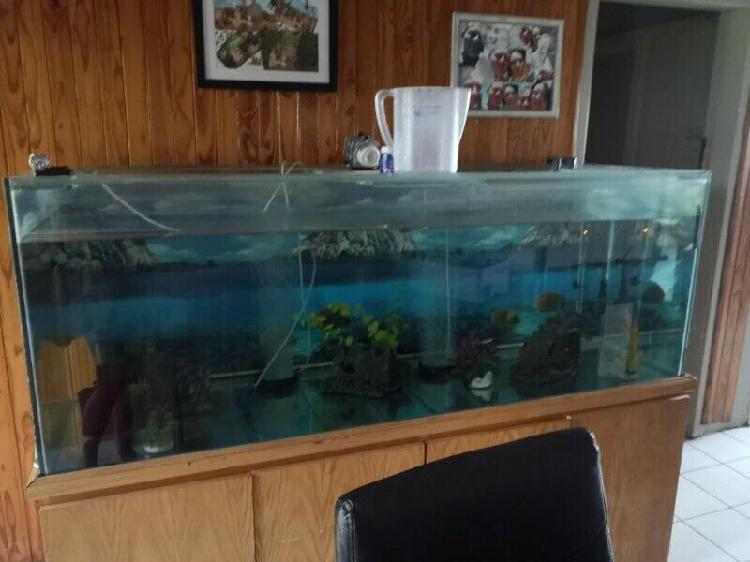 Fish tank 500lt