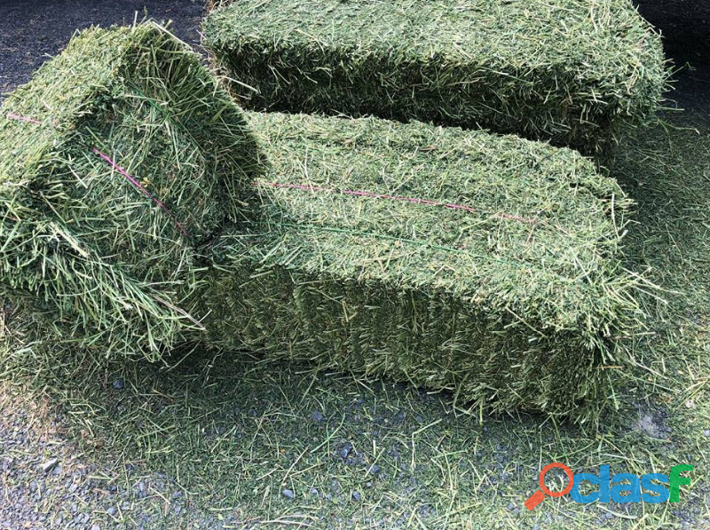 Lucerne / Alfalfa and Teff Hay bales   Whatsapp +27655406895