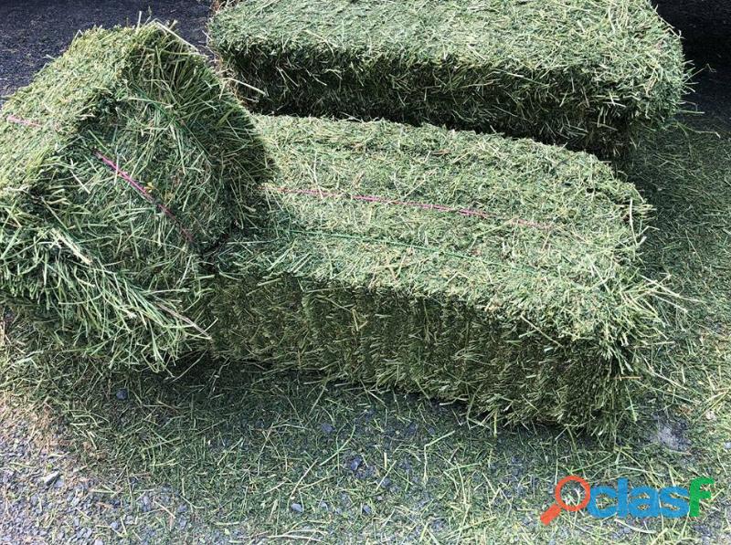 Lucerne / alfalfa and teff hay bales   whatsapp +27655406895