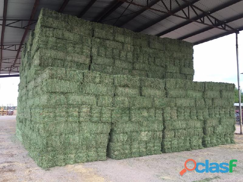 Lucerne / Alfalfa and Teff Hay bales   Whatsapp +27655406895 1