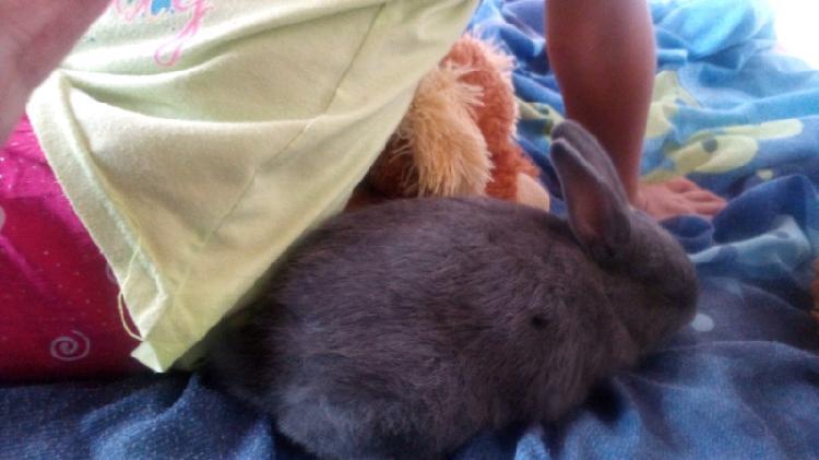 3 cute baby bunnies