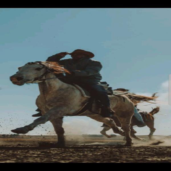 Quarter horse x gelding - sire is registered quarter horse