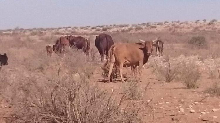Kalahari farm for sale