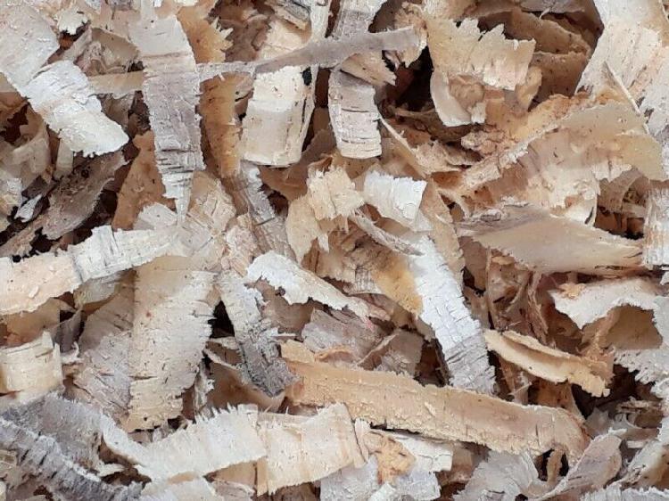Shavings pine