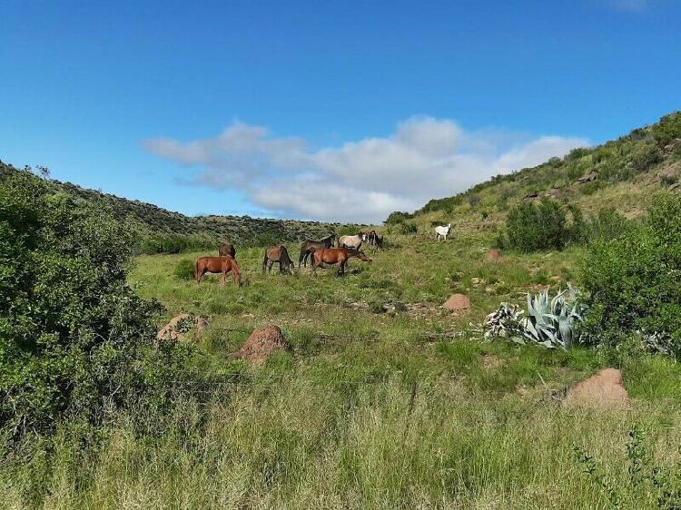 Wild horses for sale
