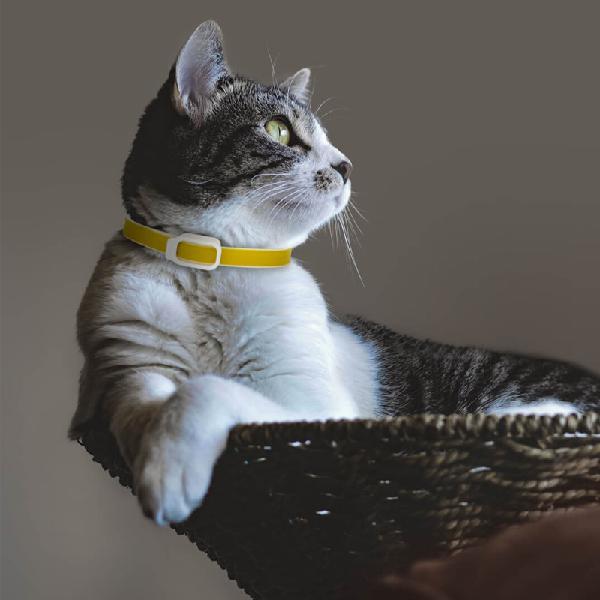 Dog collar eliminating flea pet dog cat anti lice plague