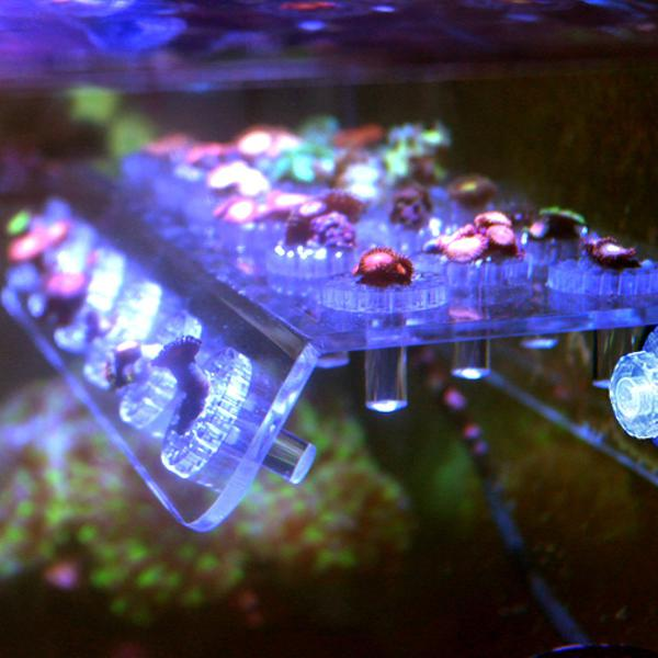Marine aquarium reef fish tank acrylic coral rack bracket