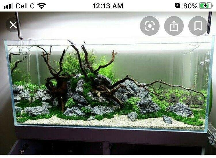 WANTED - 100 - 120 L Fish tank and stand