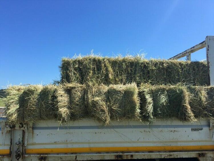 Animal feeding grass for sale