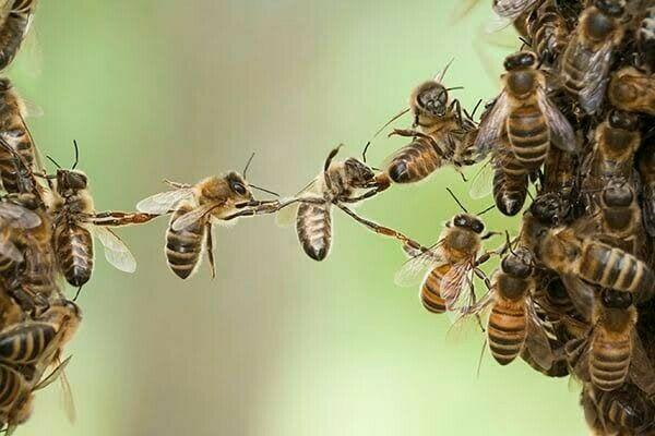 Bees/swarm removal @ 078 350 6816