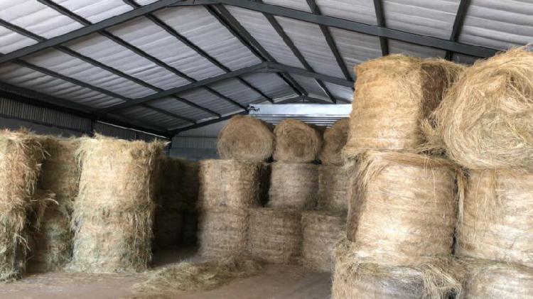 1,2m Teff bales for sale
