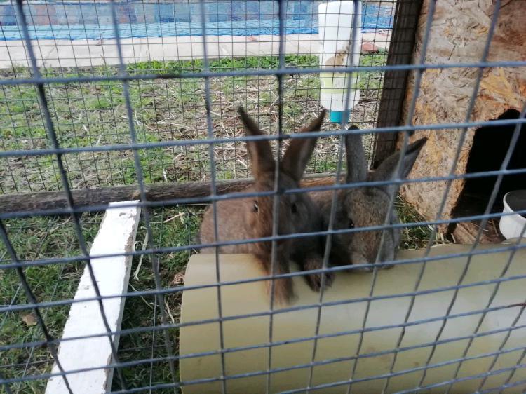 Baby bunny's