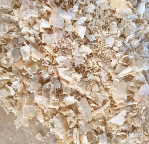 Shavings. lamb crate bedding