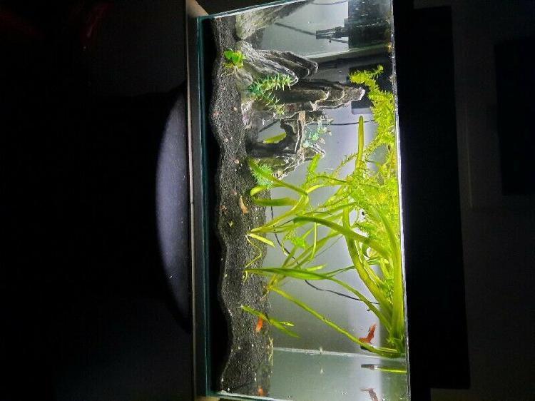 2 foot 50l fish tank for sale