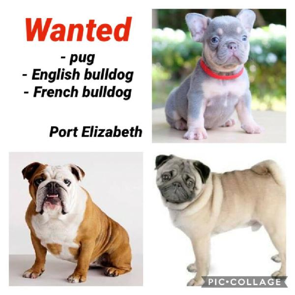 Puppies wanted