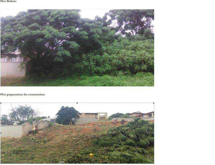 Tree felling ,garden mantain and plot.site.yard clearing.