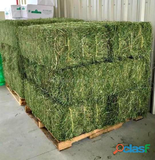 Top Quality American Alfalfa Hay Bales for Animal Feed 0