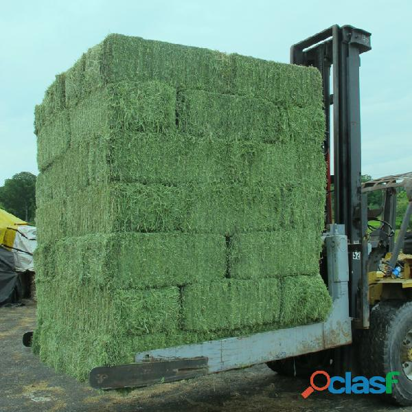 Top Quality American Alfalfa Hay Bales for Animal Feed 2