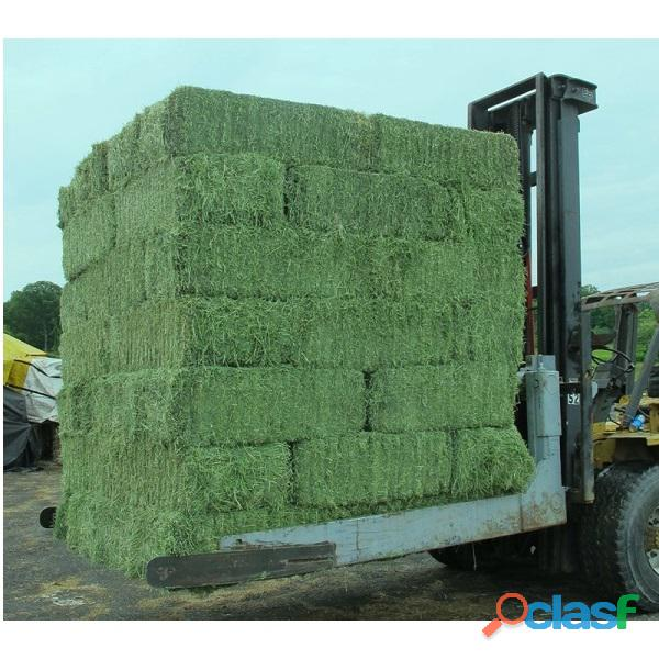 Top Quality American Alfalfa Hay Bales for Animal Feed 5