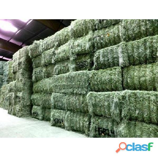 Top Quality American Alfalfa Hay Bales for Animal Feed 8