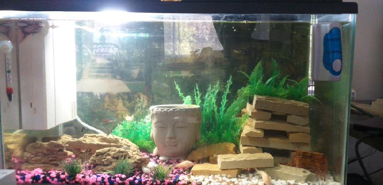 Large complete fish tank