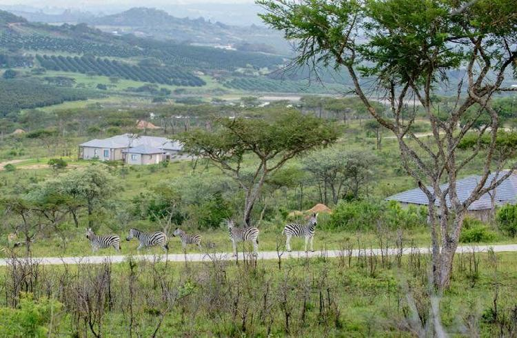 1ha vacant land for sale in likweti bushveld farm estate