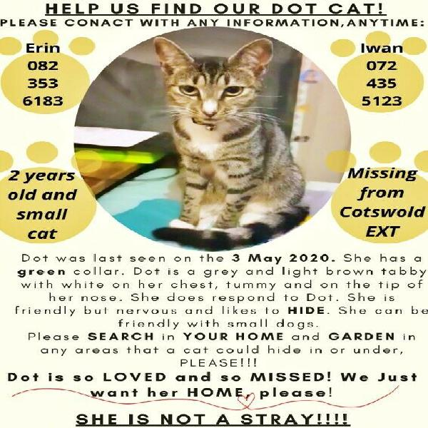 Our missing cat dot