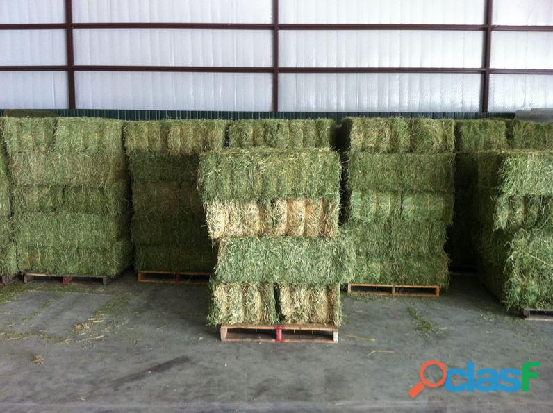 500 Bales of Large Round Mixed Grass Alfalfa and Lucien